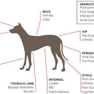 K-Laser-Dog-Applications