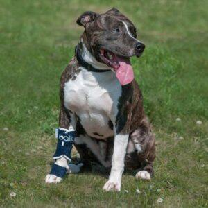 Balto-BT-Splint-Photo